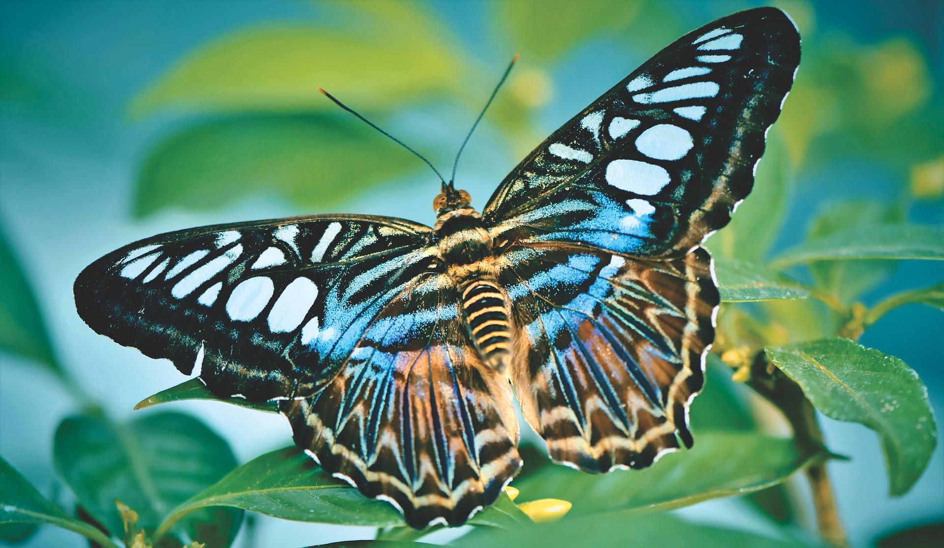 Schmetterling_2